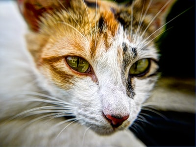 How to avoid the 'fat cat' look