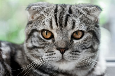 Watch: Cat acne treatment is an 'awesome' new treatment for rolling acne scars